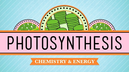 Electricity Photosynthesis