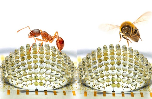 Physics of Insect Eye